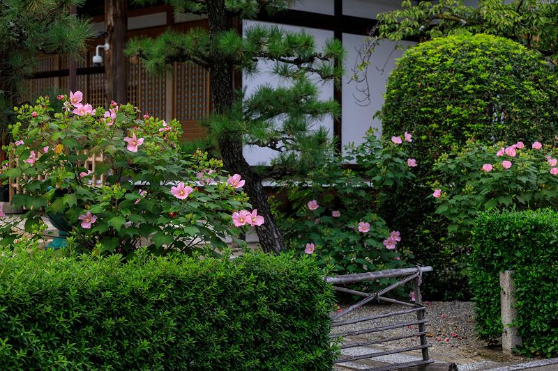 芙蓉と彼岸花咲く妙蓮寺_f0155048_2326612.jpg