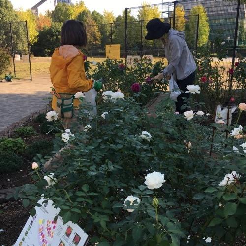11月月例会 駒場野公園_a0094959_15015139.jpeg