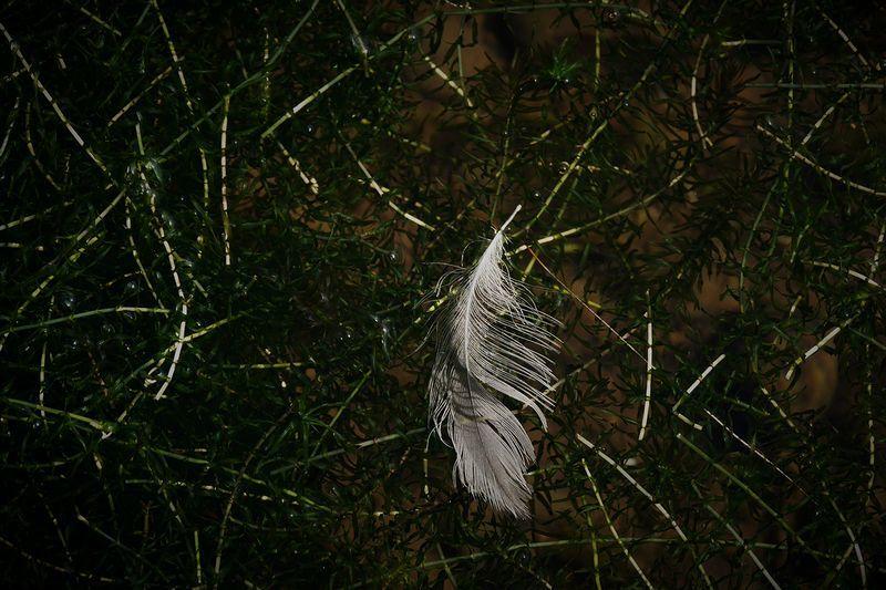 水鳥の落とし物_b0150077_21280704.jpg