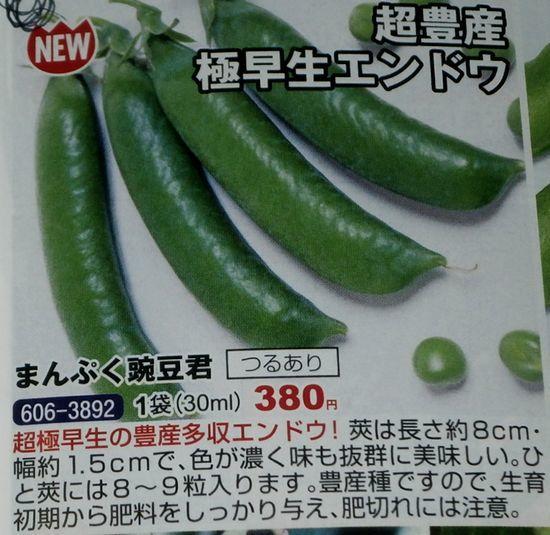 超極早生の「まんぷく豌豆」の発芽など_f0018078_17495630.jpg