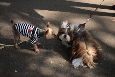 今日は久しぶりにK公園にお散歩に♪_c0090198_17231199.jpg