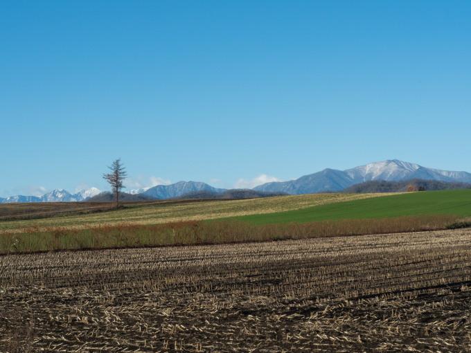 冠雪の日高山脈と晩秋色になった畑のパッチワーク_f0276498_14281234.jpg
