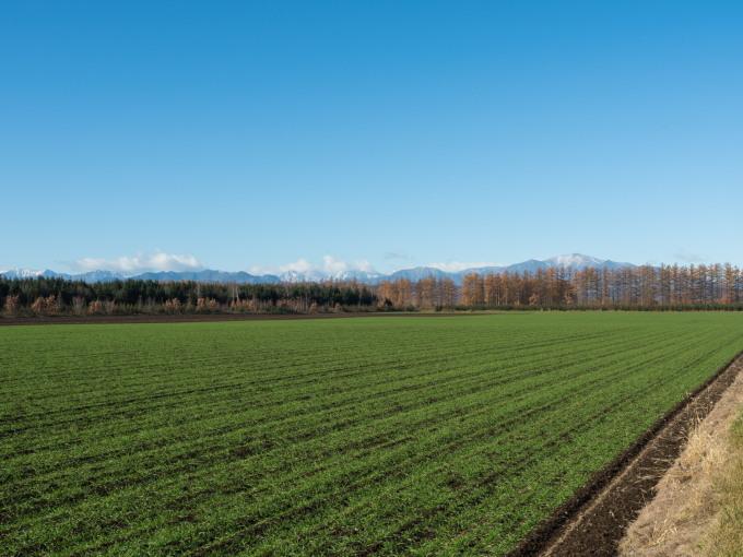 冠雪の日高山脈と晩秋色になった畑のパッチワーク_f0276498_14284465.jpg