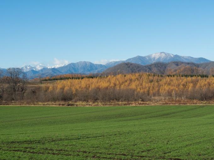冠雪の日高山脈と晩秋色になった畑のパッチワーク_f0276498_14311603.jpg