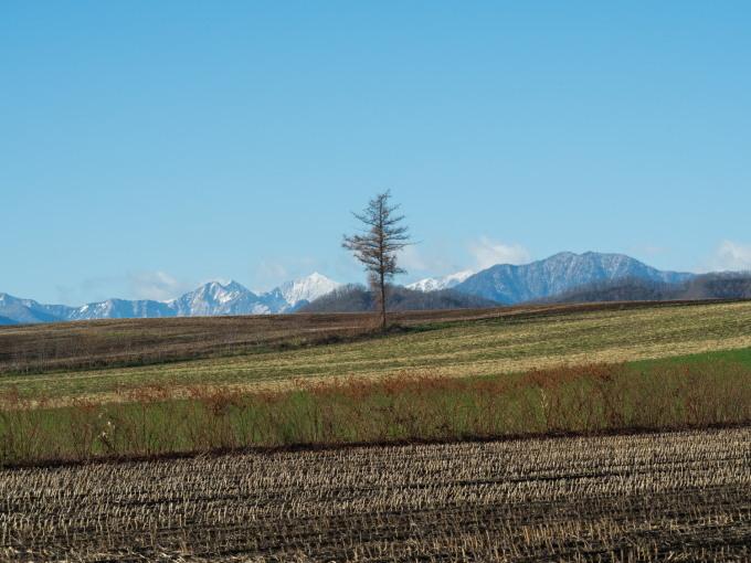 冠雪の日高山脈と晩秋色になった畑のパッチワーク_f0276498_14315874.jpg
