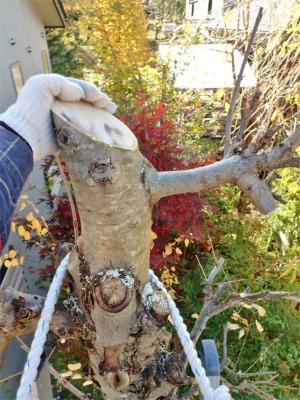 兼業農家の冬準備は庭木の剪定から・・・②_c0336902_20020909.jpg