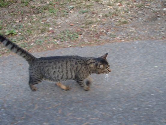 猫と散歩?_f0064906_14363376.jpg