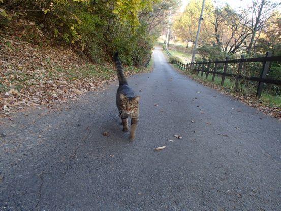 猫と散歩?_f0064906_14363772.jpg
