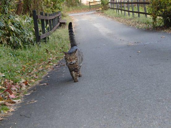 猫と散歩?_f0064906_14364285.jpg