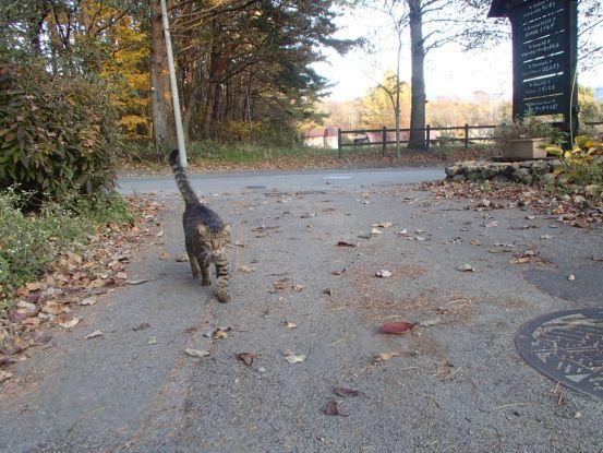 猫と散歩?_f0064906_14364318.jpg