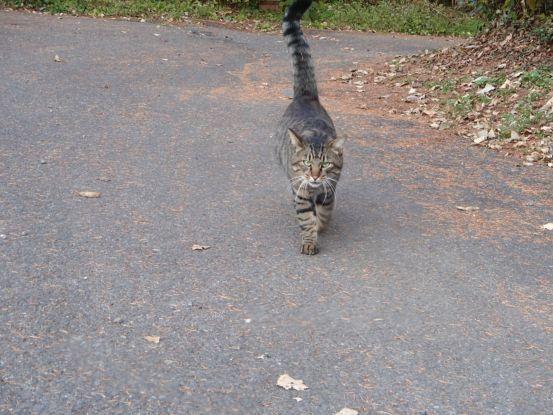 猫と散歩?_f0064906_14370090.jpg