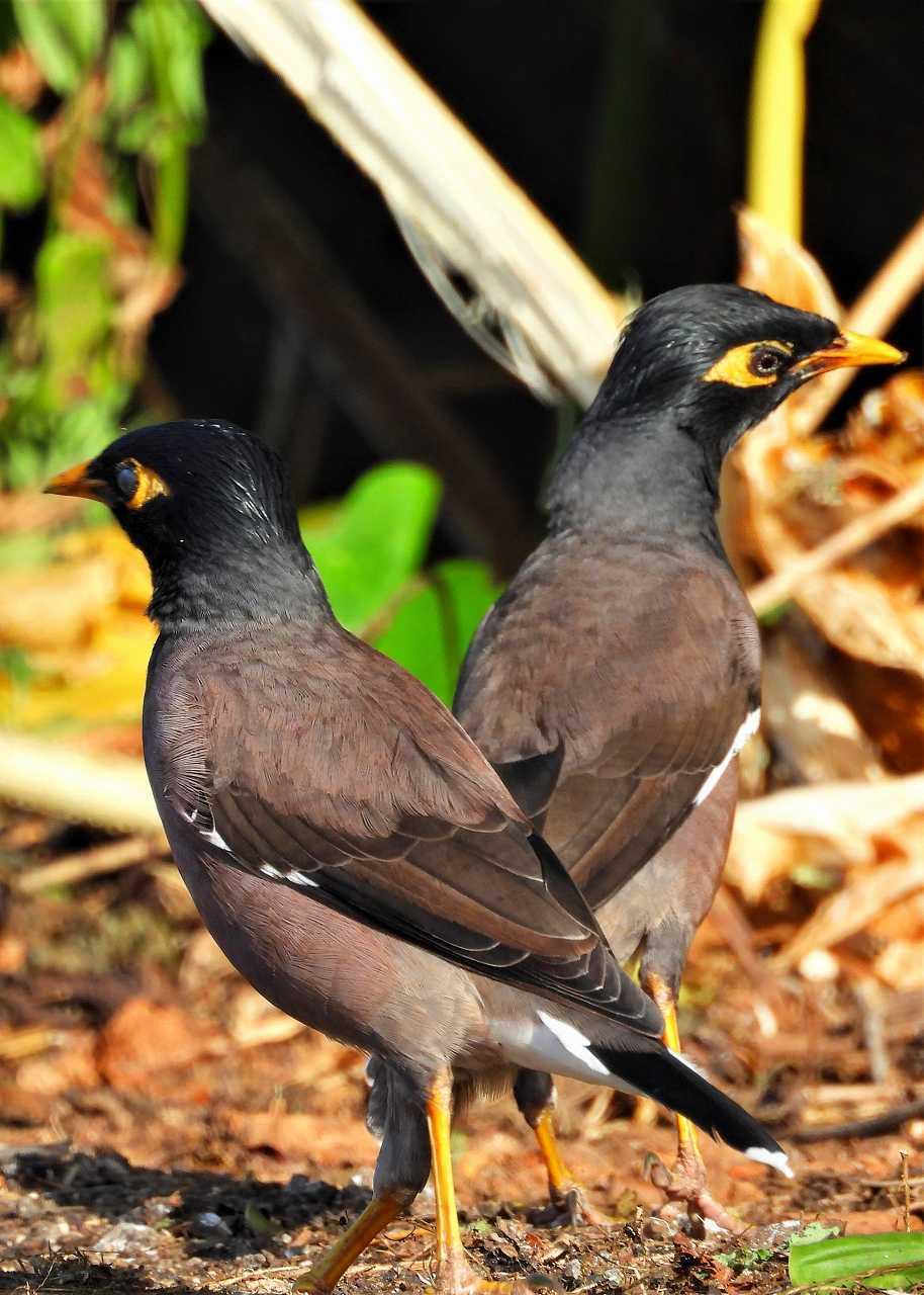 八重山諸島~探鳥~与那国島編 ⑲_d0360910_02204695.jpg