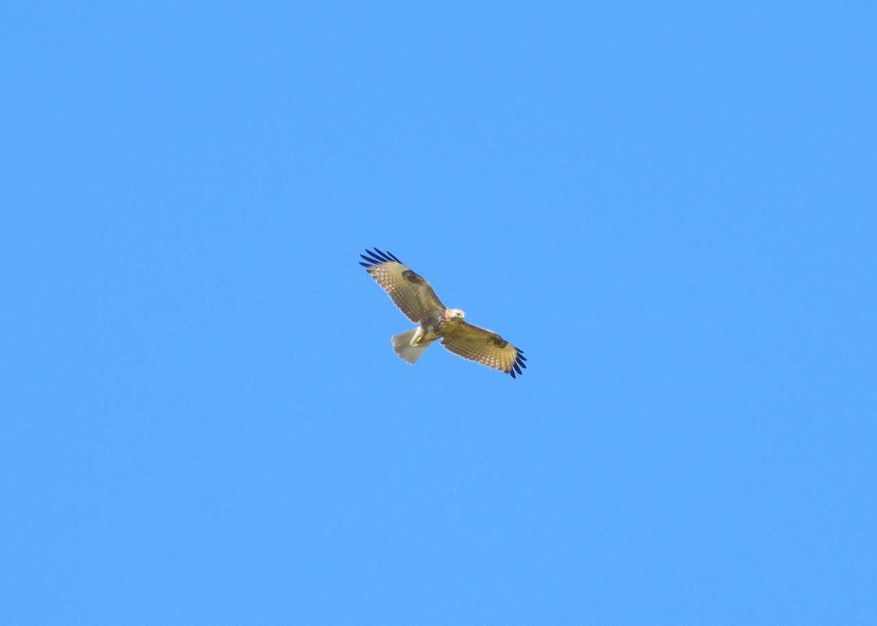 八重山諸島~探鳥~与那国島編 ⑰_d0360910_04192096.jpg