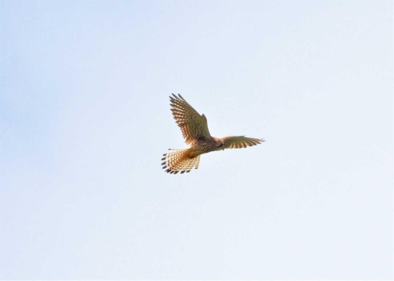 八重山諸島~探鳥~与那国島編 ⑰_d0360910_04201196.jpg