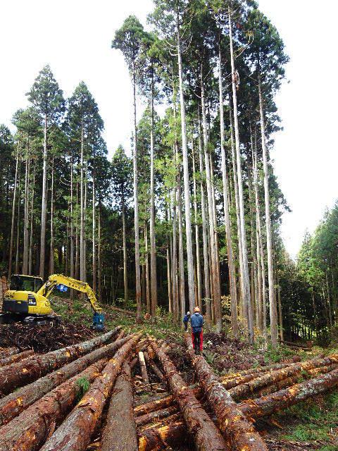 木材の伐採現場の見学へ行ってきました!_f0105112_04044213.jpg