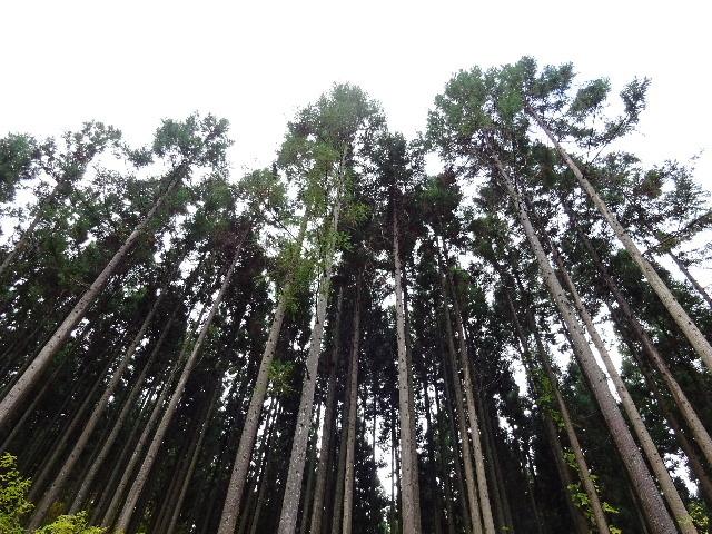 木材の伐採現場の見学へ行ってきました!_f0105112_04044257.jpg