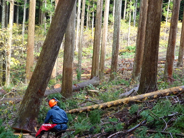 木材の伐採現場の見学へ行ってきました!_f0105112_04143409.jpg
