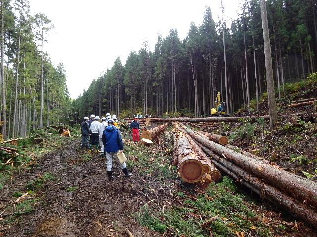木材の伐採現場の見学へ行ってきました!_f0105112_04143450.jpg