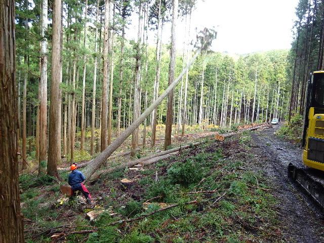 木材の伐採現場の見学へ行ってきました!_f0105112_04143469.jpg
