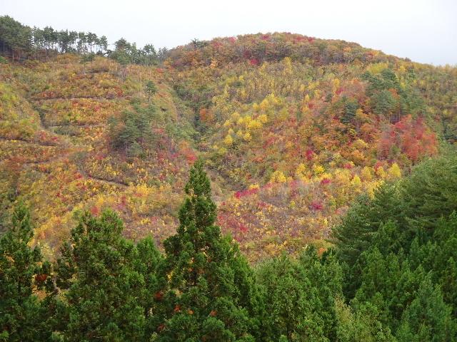 木材の伐採現場の見学へ行ってきました!_f0105112_04210917.jpg