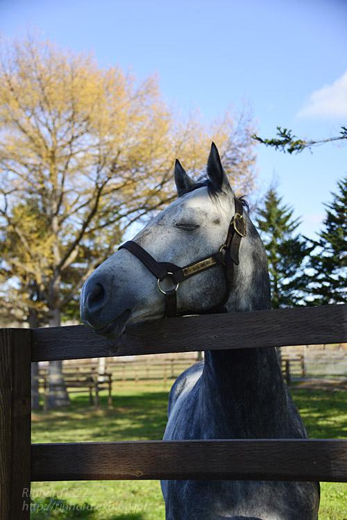 2019 霜月の馬旅~プロローグ_f0250322_22165078.jpg