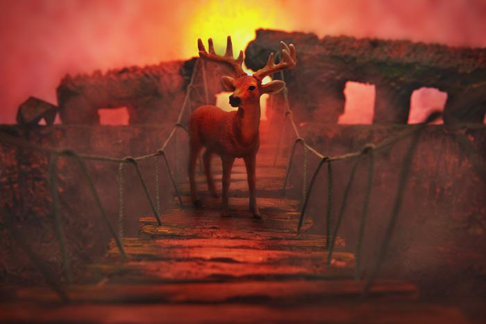 吊り橋を渡る鹿〜ネイリーマン諸島_b0175635_11114433.jpg