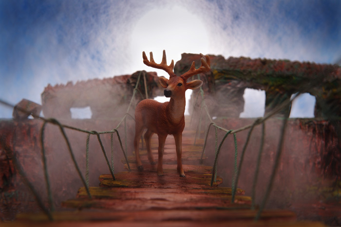 吊り橋を渡る鹿〜ネイリーマン諸島_b0175635_11121050.jpg