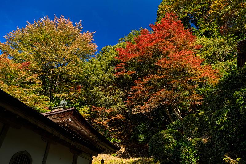 紅葉が彩る京都2019 染まり始めた常照皇寺_f0155048_22381176.jpg