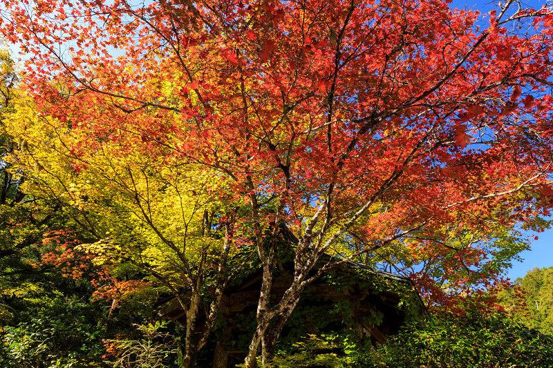 紅葉が彩る京都2019 染まり始めた常照皇寺_f0155048_22381784.jpg