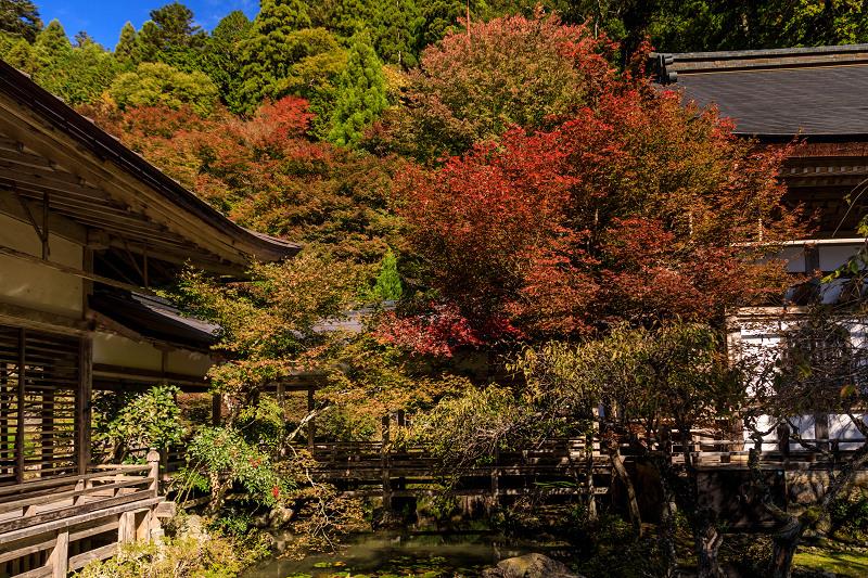 紅葉が彩る京都2019 染まり始めた常照皇寺_f0155048_22384433.jpg