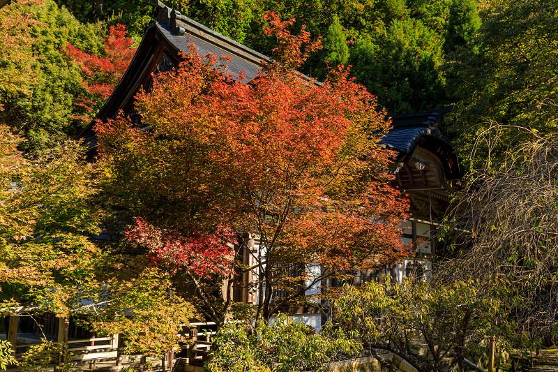 紅葉が彩る京都2019 染まり始めた常照皇寺_f0155048_22385149.jpg