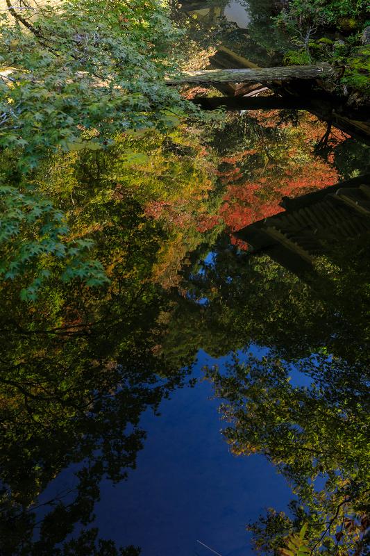紅葉が彩る京都2019 染まり始めた常照皇寺_f0155048_22385963.jpg
