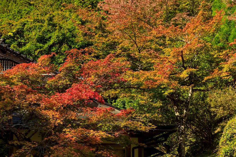 紅葉が彩る京都2019 染まり始めた常照皇寺_f0155048_22391296.jpg