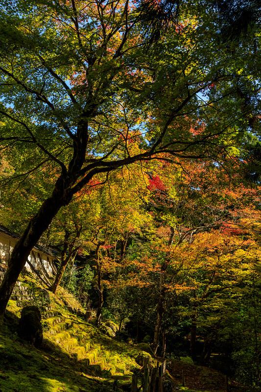 紅葉が彩る京都2019 染まり始めた常照皇寺_f0155048_2239246.jpg