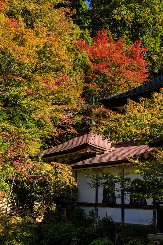紅葉が彩る京都2019 染まり始めた常照皇寺_f0155048_2239781.jpg