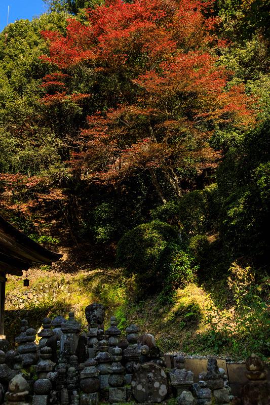 紅葉が彩る京都2019 染まり始めた常照皇寺_f0155048_22403255.jpg
