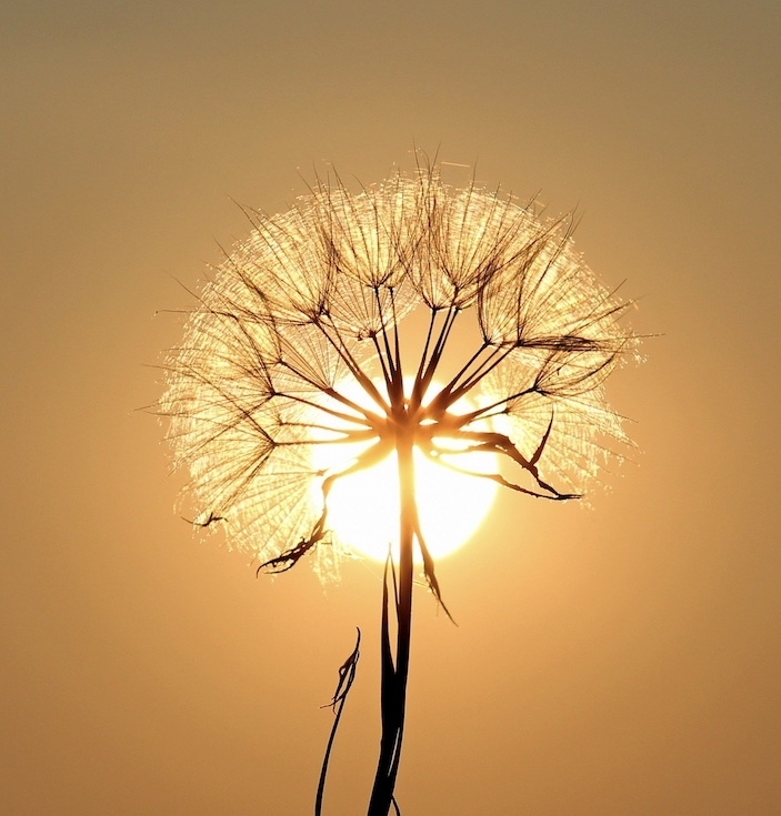 今週のメッセージ:大天使メタトロンからのメッセージ②夢を見つめることの大切さ_f0362457_22203115.jpg