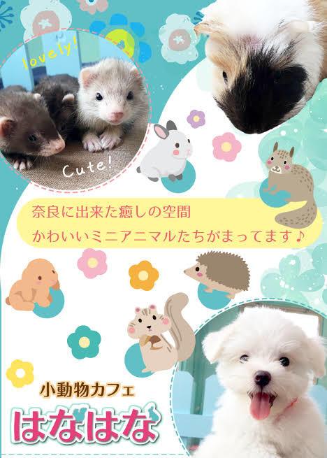 鹿カチューシャが奈良で買えるようになりました!_a0383167_00512660.jpg