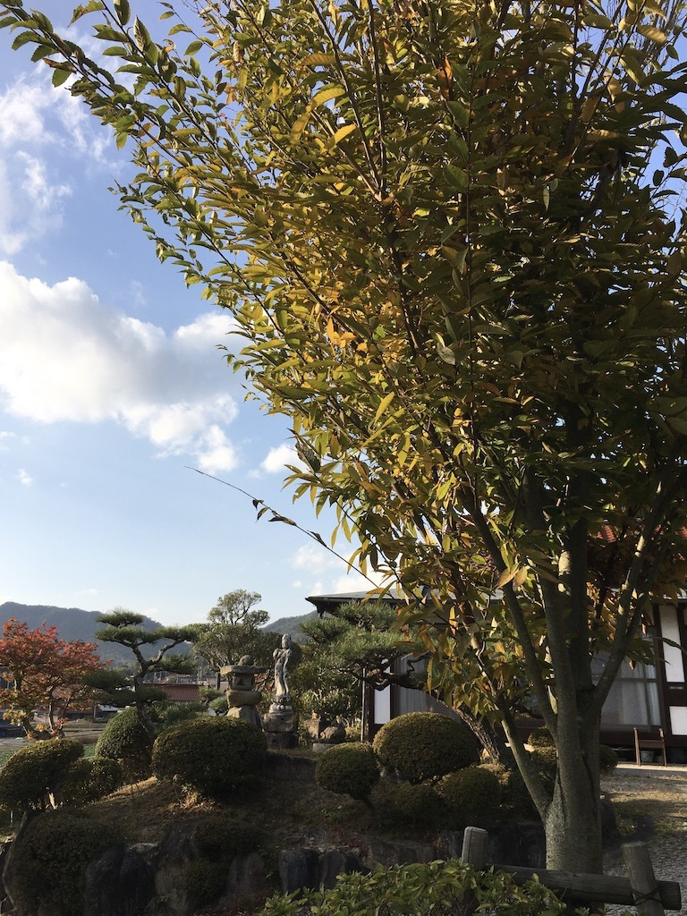 暖かな11月 〜まばらな紅葉〜_c0334574_19254600.jpg