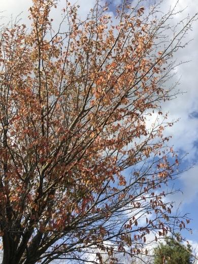 暖かな11月 〜まばらな紅葉〜_c0334574_19260591.jpg