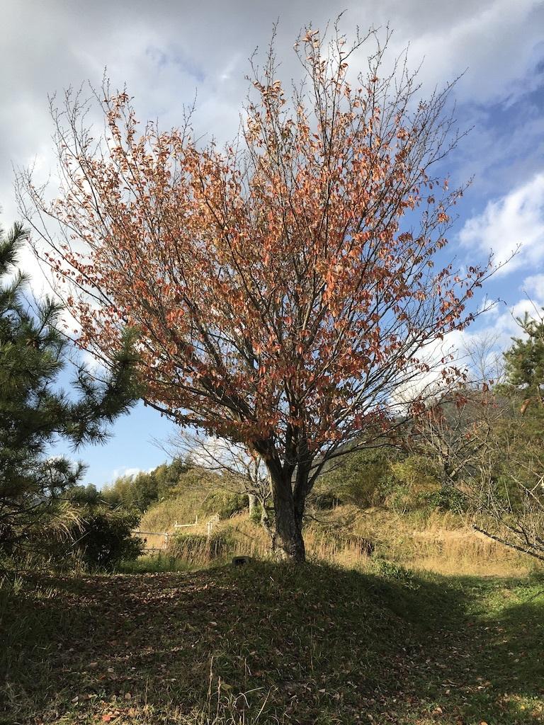 暖かな11月 〜まばらな紅葉〜_c0334574_19262692.jpg