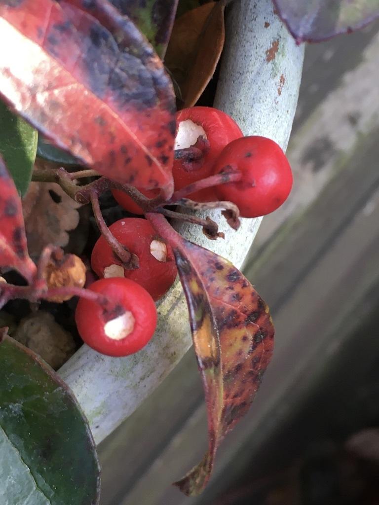 暖かな11月 〜まばらな紅葉〜_c0334574_19284827.jpg