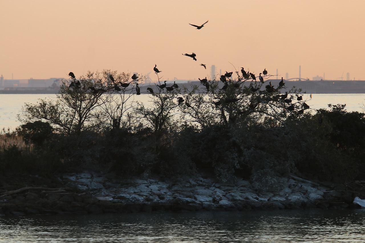★オカヨシガモもやってきました・・・先週末の鳥類園(2019.11.9~10)_e0046474_01235315.jpg
