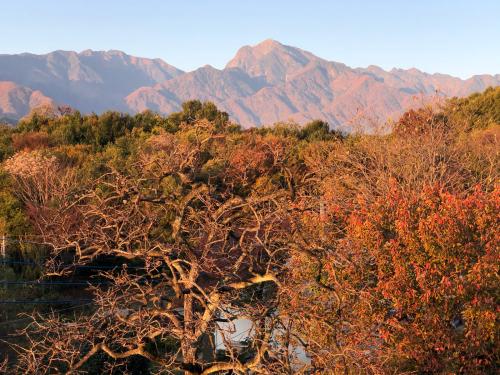 秋らしい色合いになってきました。ダンコウバイの、黄色が輝きを増してきました。_d0338282_15125253.jpg