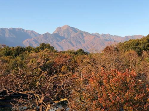 秋らしい色合いになってきました。ダンコウバイの、黄色が輝きを増してきました。_d0338282_15155274.jpg