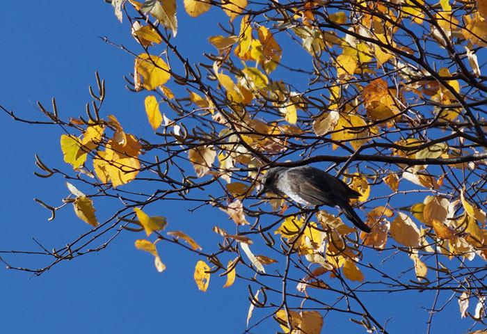 野鳥_d0162994_08293102.jpg