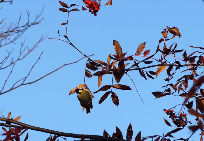 野鳥_d0162994_08301554.jpg