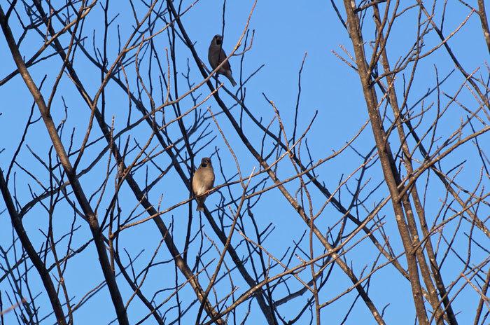 野鳥_d0162994_08302666.jpg