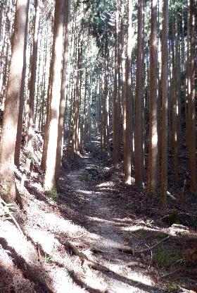 熊野古道は杉の道_e0077899_9413110.jpg