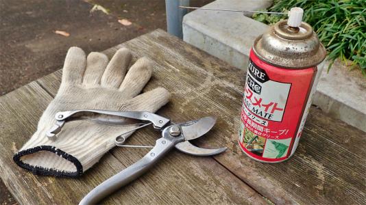 兼業農家の冬準備は庭木の剪定から・・・③_c0336902_20494992.jpg
